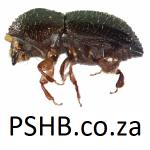 www.PSHB.co.za