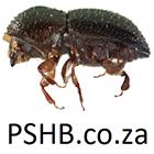PSHB.co.za